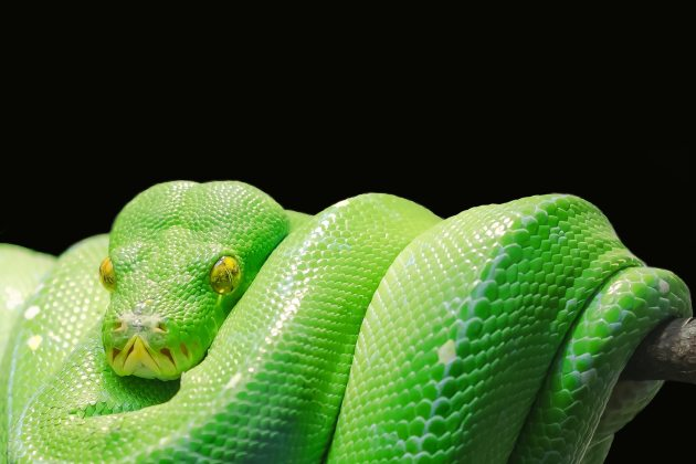 animal-close-up-green-45246